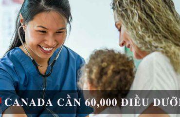 canada-can-60000-dieu-duong
